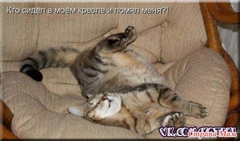 Фотки мамы кошки