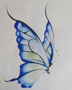 butterfly drawings images   butterfly