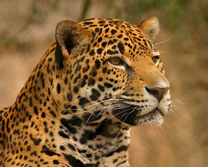 rodericks hs experience     jaguar