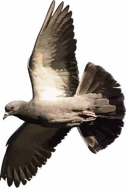 Osprey Bird Eagle Library Wing Beak Transparent