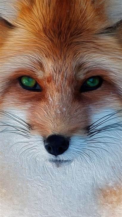 Iphone Fox Cool Wallpapers Plus Animal 4k