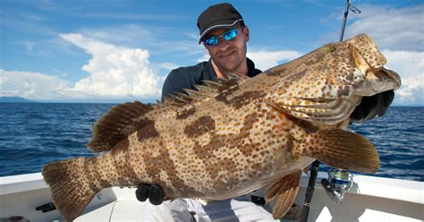 grouper cook fish recipes way soup fillet recipe head bones use amazing useful give making does only saltstrong