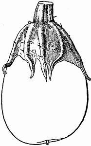Non-Pollinated Eggplant | ClipArt ETC