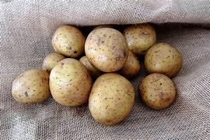 Kartoffeln Und Zwiebeln Lagern : kartoffeln lagern tipps und tricks zur richtigen aufbewahrung wiressengesund ~ Markanthonyermac.com Haus und Dekorationen