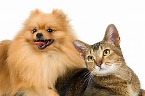 diseases passed between cats dogs 5596