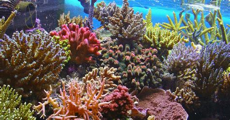 The Great Barrier Reef's Coral Is Dying Rapidly, Due to Climate Change