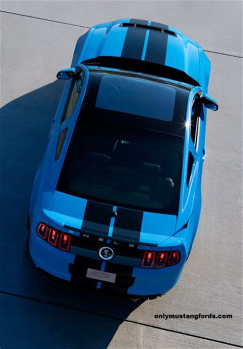 shelby mustang gt