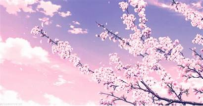 Cherry Japan Blossoms Facts Types Hey