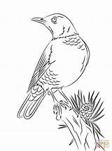 Robin Coloring Pages American Bird Drawing Printable Robins Perched Woodland Birds Colorear Para Dibujo Primavera Mirlo Supercoloring Gratis Dibujos Animales sketch template