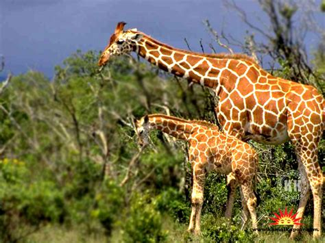 Discovery Animal Wallpaper - the animals kingdom discovery animals wallpapers