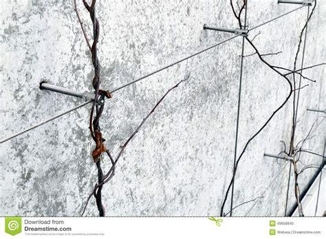 Wire Trellis Stock Photo  Image 49658845