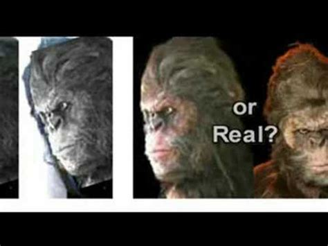 bigfoot body   georgia hoax youtube