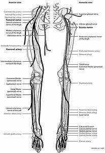 Of Lower Extremity Nerves