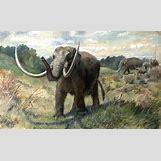 Prehistoric Predators Bear Dog | 700 x 423 jpeg 55kB