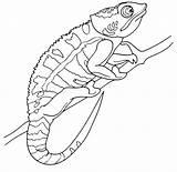 Chameleon Coloring Kameleon Printable Camaleao Colorir Reptiles Cameleon Colorear Bukalemun Boyama Kolorowanki Coloriage Desenhos Desenho Dibujos Animaux Imagens Dzieci Dla sketch template