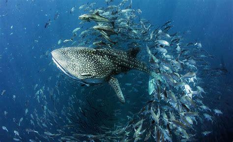 Underwater Water