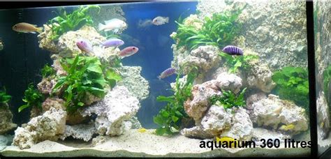 aquarium decor de fond thin backgrounds aquaroche