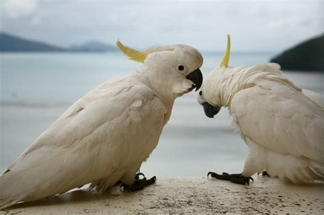 Wild Parrots Learning To Talk