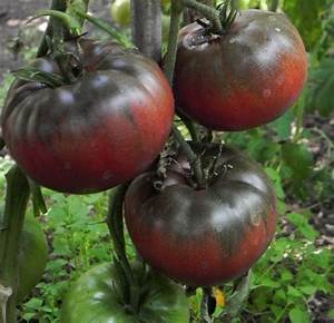 Black, Hands and Heirloom tomatoes on Pinterest