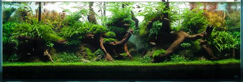 Decoration Aquascaping, Bring Nature Inside Home Ideas