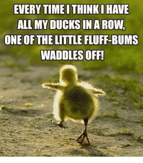 Ducks Meme - everytime ithinki have allmy ducks in a row one of the little fluff bums waddles off meme on