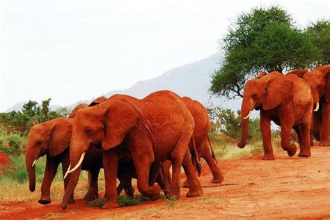 Best Safaris In Kenya 2 Days Tsavo East Safari Southern Valley Safaris