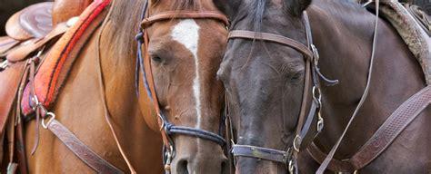 riding horseback asheville places near