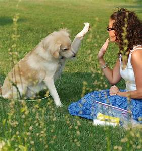 austin animal shelters in texas guide to selecting a With dog behaviorist