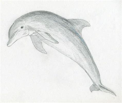 ideas  easy animal drawings  pinterest