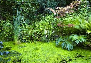 Farn Im Garten : ziergr ser schilf und farn obi ratgeber ~ Orissabook.com Haus und Dekorationen