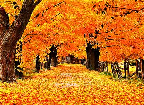 Gold Autumn Wallpapers autumn screensavers free hd wallpapers