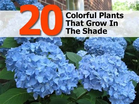 desk plants that don t need sunlight 28 outdoor plants that don t need sunlight 17 best
