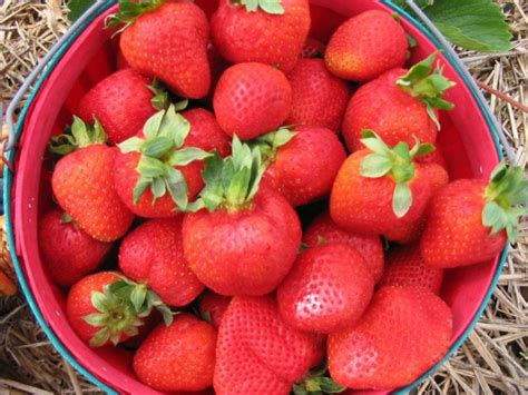 how to grow strawberries how to grow strawberries how tos diy