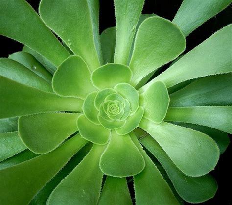 succulent plants images free succulent plant stock photo freeimages com