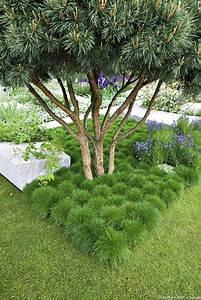 Arbres A Pousse Tres Rapide : les 25 meilleures id es de la cat gorie arbres en pots sur ~ Premium-room.com Idées de Décoration