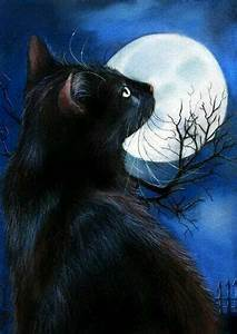 Cats La : 255 best images about cat 39 s and the moon on pinterest cats la luna and tuxedo cats ~ Orissabook.com Haus und Dekorationen