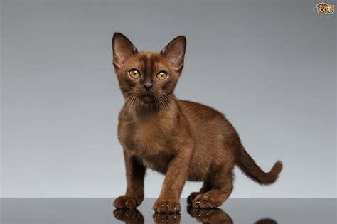 Flat Chested Kitten Syndrome (fcks)