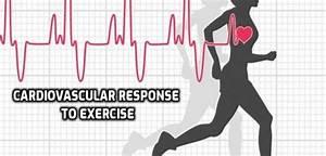 Cardiovascular Response To Exercise  U2022 Bodybuilding Wizard