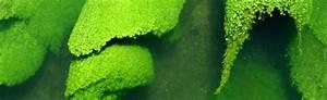 Die Farbe Grün : farbe gr n farbe der hoffnung du bist innen und au en ~ A.2002-acura-tl-radio.info Haus und Dekorationen