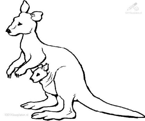 kangaroo coloring pages  coloring pages