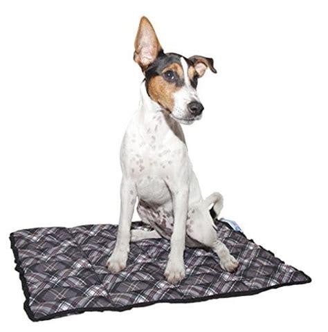kuehlmatte fuer hunde abkuehlung bei hitze seniorpfoten