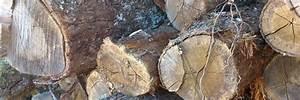 Bois De Chauffage 22 : bois de chauffage ch ne m ze et environs la sarl jullian vous propose diverses essences de ~ Nature-et-papiers.com Idées de Décoration