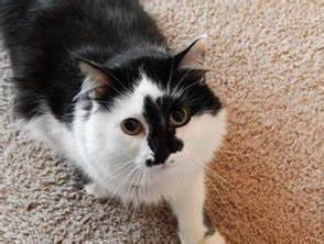comment nettoyer urine de chat sur tapis la reponse est With tapis jonc de mer avec nettoyage canapé tissu professionnel