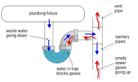Why a P trap is important for your plumbing drainage   AWP