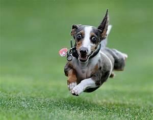 10 Ways You Know You're Dog Crazy