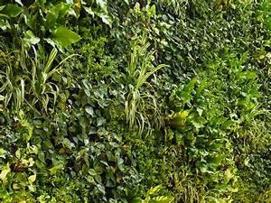 Pflanzenwand Selber Machen : mooswand selber bauen moss wall diy solution from ~ Whattoseeinmadrid.com Haus und Dekorationen