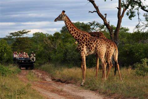 Top 5 African Safari Destinations For An Unforgetable ...