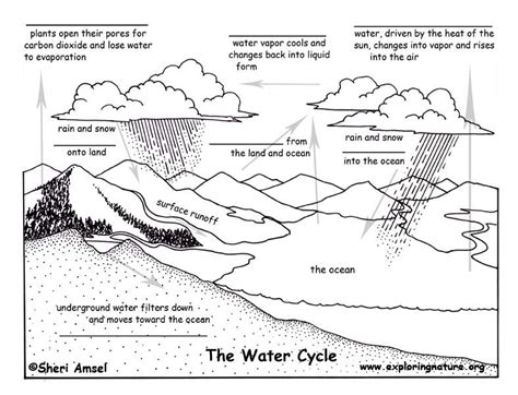 cycles in nature worksheet the blank quiz water