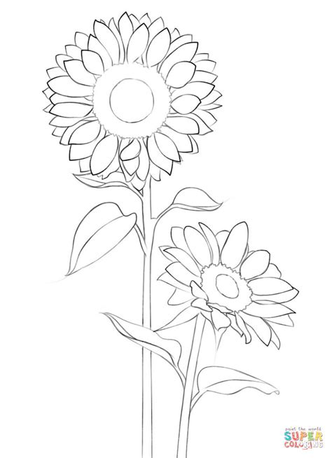 Sunflower coloring page | Free Printable Coloring Pages