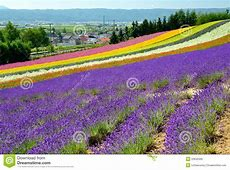 Colorful Flower Field, Hokkaido, Japan Royalty Free Stock